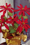 pointsettia pattern
