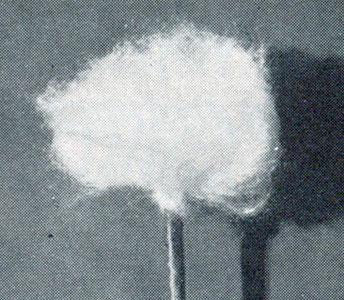 Dandelion Seed Pattern
